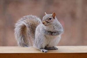 Những động vật có thai kỳ ngắn đến kinh ngạc