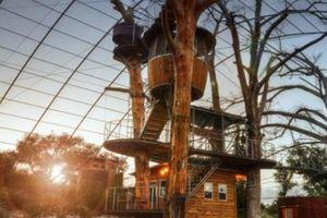 Mãn nhãn với những căn nhà cây siêu to đẹp, ước mơ tuổi thơ của mọi đứa trẻ