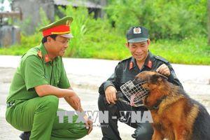 Huấn luyện chó nghiệp vụ: Nguy hiểm và công phu