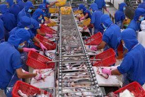 Mô hình nuôi khép kín giúp ổn định nguồn nguyên liệu cá tra