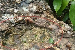 Dấu chân người trên đá và câu chuyện kỳ lạ về 'lời nguyền' ngàn năm