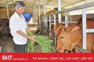 'Nở rộ' nhiều mô hình kinh tế từ quỹ hỗ trợ nông dân ở Hương Sơn