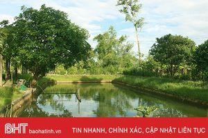 Khu vườn mẫu đẹp như tranh của lão nông Hà Tĩnh