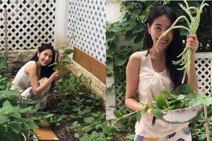 Thủy Tiên giản dị hái rau vườn nhà, hài hước kể chuyện ăn không hết phải mang ra chợ bán