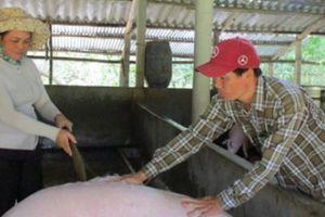 Quảng Ngãi: Nông dân đổi đời nhờ vốn Agribank