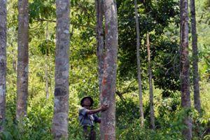 Triết lý của hai lão nông Vân Kiều dành cả đời để trồng rừng