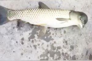 Bắt được con cá đầu chim kỳ dị tại Trung Quốc
