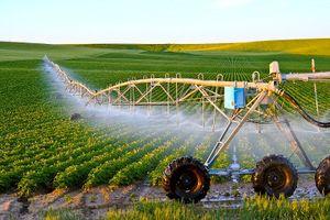 Xuất khẩu nông sản: Đâu là 'át chủ bài'?