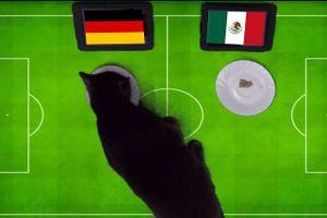 'Tiên tri' mèo đen đoán Mexico sẽ gục ngã trước Đức