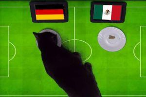 'Tiên tri' mèo dự đoán Đức sẽ hạ gục Mexico