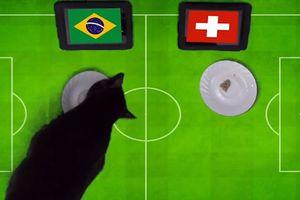 'Thánh mèo' dự đoán kết quả trận đấu giữa Brazil và Thụy Sĩ