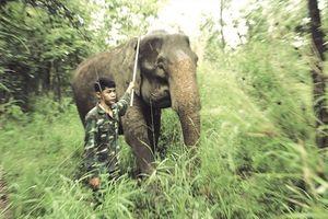 Gian nan bảo tồn voi Tây Nguyên