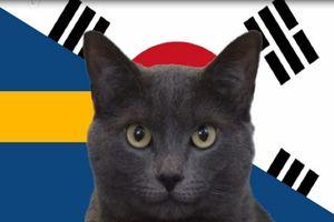 Mèo Cass tiên tri ĐT Hàn Quốc đánh bại Thụy Điển