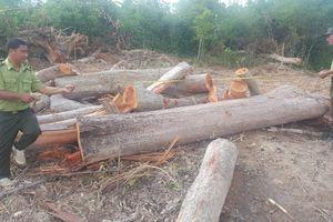 1 ha rừng bị phá, nhiều ngày sau kiểm lâm mới biết