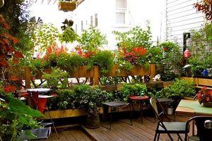 Những khu vườn trên sân thượng khiến hội yêu hoa nhìn là mê