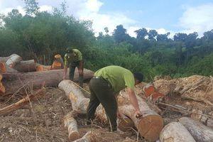 Đắk Lắk: Sẽ khởi tố vụ đưa xe múc vào phá trắng gần 1ha rừng