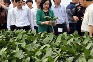 Hà Nội: Nông nghiệp tăng trưởng vững như 'kiềng ba chân'