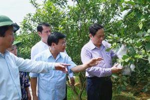 Đảm bảo chất lượng, hiệu quả và không chạy theo thành tích trong xây dựng nông thôn mới