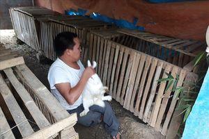 Chuyện tình của chàng trai xương thủy tinh nuôi thỏ