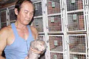 Nuôi 700 cặp dúi, bán giống 4 triệu/cặp, bán thịt 400 ngàn/kg