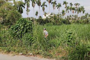TP HCM: Bàng hoàng phát hiện thi thể người đàn ông đang phân hủy mạnh ở bãi cỏ