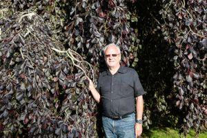 Choáng ngợp trước vườn cây quý hiếm của ông lão 75 tuổi, giá 3,5 tỷ đồng mỗi cây