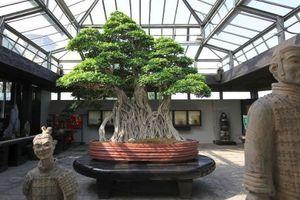 Chiêm ngưỡng 7 cây bonsai 'thọ' nhất thế giới