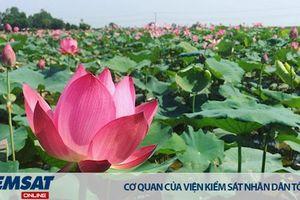 Sắp có Lễ hội dành riêng cho hoa Sen ở Huế