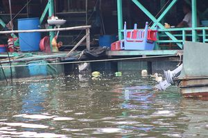 Nước bẩn, rác thải tấn công du khách ở đảo Cát Bà