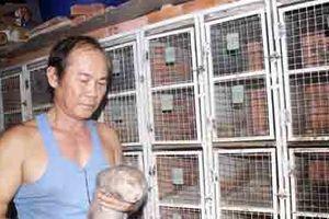 Xây nhà nuôi 700 cặp dúi, bán giống 4 triệu/cặp, bán thịt 400 ngàn/kg