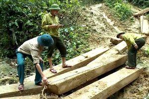 Phá rừng tại Quảng Bình: Thêm một lãnh đạo bị kỷ luật