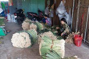 Cây sả ở vùng cù lao Tiền Giang 'trồng chơi, ăn thật'