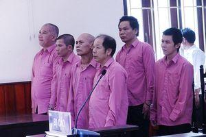 Bình Định: Hoãn xử vụ phá rừng đặc biệt nghiêm trọng