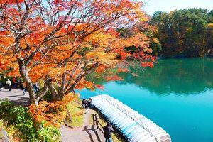 Hành trình tuyệt đẹp khám phá mùa thu trên đất nước mặt trời mọc
