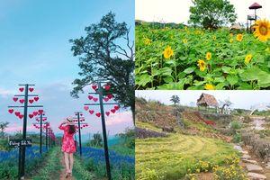 Cuối tuần có hẹn với vườn hoa đẹp như mơ ở Mộc Châu