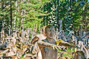 Khu rừng 'ma quái' hút khách ở Phần Lan