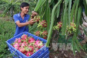 Trái cây Việt Nam từng bước chinh phục thị trường thế giới