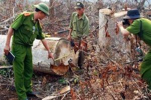 Giám đốc và trưởng phòng để mất hàng trăm hécta rừng bị bắt giam
