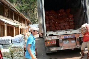 Nông sản siêu rẻ Trung Quốc đổ về rầm rộ, 'đội lốt' nông sản Đà Lạt