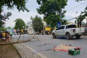 Đi trên đường, chồng chết vợ bị thương vì cành cây rơi trúng đầu