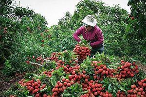 Bắc Giang: Tốc độ tăng trưởng kinh tế 6 tháng đầu năm cao nhất từ trước đến nay
