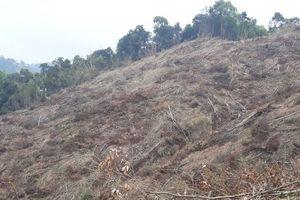 Hủy hoại rừng để rồi phải lĩnh hậu quả 'đắng chát'