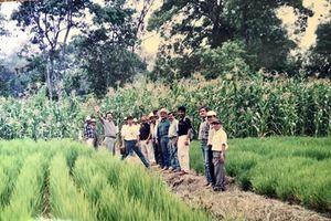 Ở quốc đảo xinh đẹp chỉ cần 2 triệu tấn gạo cho 10 triệu dân, sao mà khó thế?