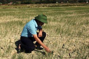 Nắng nóng kéo dài, gần 23 nghìn ha ruộng nứt nẻ