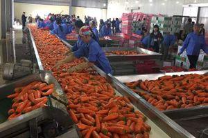 Trung Đông - châu Phi là lối ra cho nông sản Việt?
