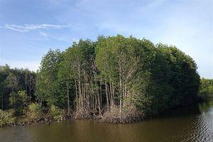 Đã xác định nguyên nhân cây rừng chết tại VQG Mũi Cà Mau