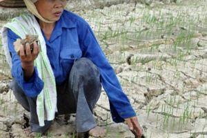 Thanh Hóa: Nông dân cay đắng nhìn ruộng nứt toác, lúa sắp chết khô