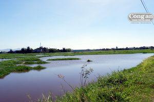 Đất trồng ở Bàu Đưng bị ngập úng: Gần chục năm ngậm ngùi nhìn cỏ mọc