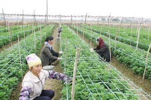 Nhiều biện pháp chống nóng cho cây trồng