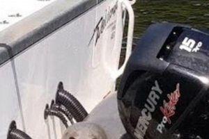 Clip: Cú né tránh khôn khéo giúp hải cẩu thoát chết ngoạn mục dưới hàm cá voi